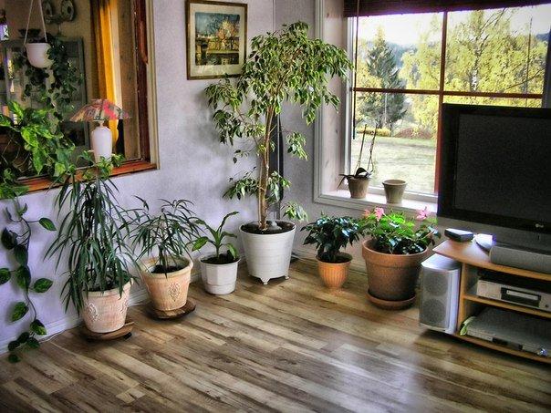 Растения в интерьере дома
